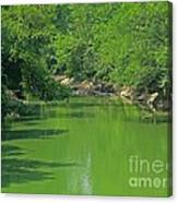 Everywhere Green Canvas Print