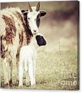 Ewe And Young Canvas Print