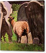 Ewe Spooked? Canvas Print
