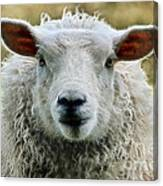 Ewe's Just Fluffy Canvas Print