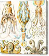 Examples Of Various Cephalopods Canvas Print