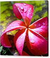 Exotic Beauty Canvas Print