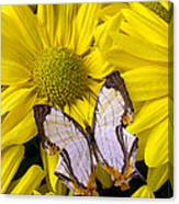 Exotic Butterfly Canvas Print