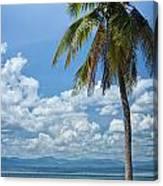 Exotic Palm Tree Canvas Print