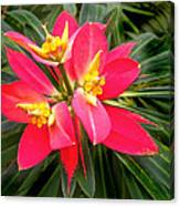 Exotic Red Flower Canvas Print