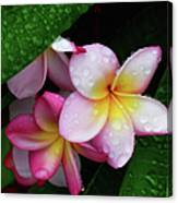Exotic Tears  Canvas Print