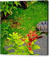 Exploration By A Red Footed Tortoise  Canvas Print
