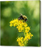 Exploring Goldenrod 2 Canvas Print