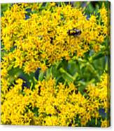 Exploring Goldenrod 5 Canvas Print