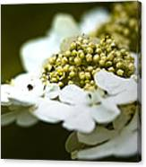Exploring The Flowers Canvas Print