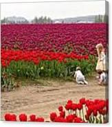 Exploring The Tulip Fields Canvas Print