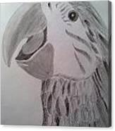 Expressive Parrot Canvas Print