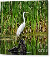 Exquisite Egret Canvas Print