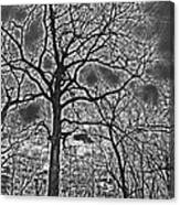 Extreme Contrast Bare Trees During Winter Photograph Canvas Print