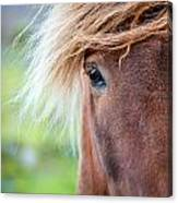 Eye Of A Pony Canvas Print