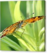 Eye Of The Butterfly Canvas Print