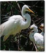 Eye Of The Egret Canvas Print