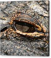 Eye Of The Gator Canvas Print