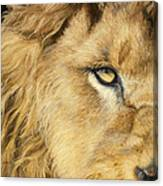 Eye Of The Lion Canvas Print