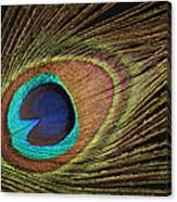 Eye Of The Peacock #5 Canvas Print