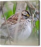 Eye On The Sparrow Canvas Print