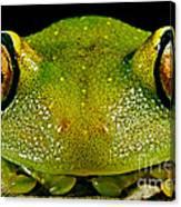 Eye-ringed Bushfrog Canvas Print