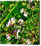 Eyebright On Trout River Trail In Gros Morne Gros Morne National Park-newfoundland  Canvas Print