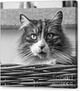 Eyecat Canvas Print