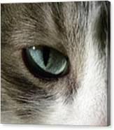 Eyes 3 Canvas Print