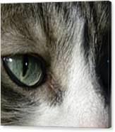 Eyes 5 Canvas Print