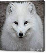 Eyes Of The Arctic Fox Canvas Print