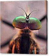 Eyes Of The Robber Fly Canvas Print