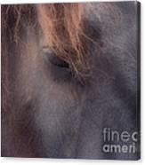 Eyes Of The Soul Canvas Print