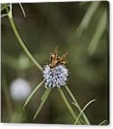 Fa-18ef Super Hornet Moth Canvas Print