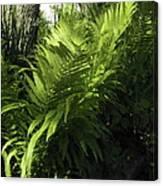 Fabulous Ferns  Canvas Print