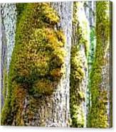 Face In The Moss Canvas Print