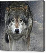 Face To Face With The Wolf Canvas Print