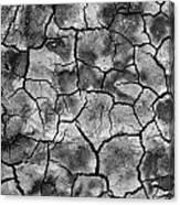 Facing The Dirt  Canvas Print
