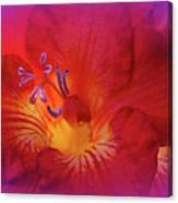 Fade To Freesia - Iridaceae Canvas Print
