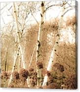 Fading Fall Canvas Print