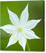 Fairy Lily Canvas Print