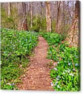 Fairy Paths Canvas Print