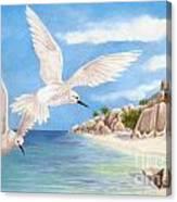 Fairy Terns Ladigue Canvas Print