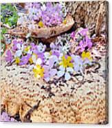 Fairy Trumpets Canvas Print
