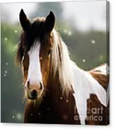 Fairytale Pony Canvas Print