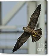 Falcon Flying By Tower Canvas Print