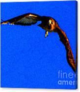 Falcon In Blue Canvas Print