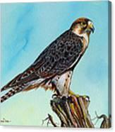 Falcon On Stump Canvas Print