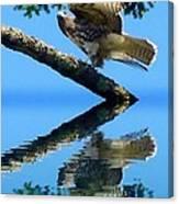 Falcon Reflect Canvas Print