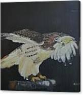 Falconry 5 Canvas Print